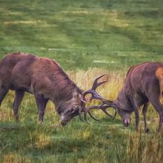 Antlers at Dawn