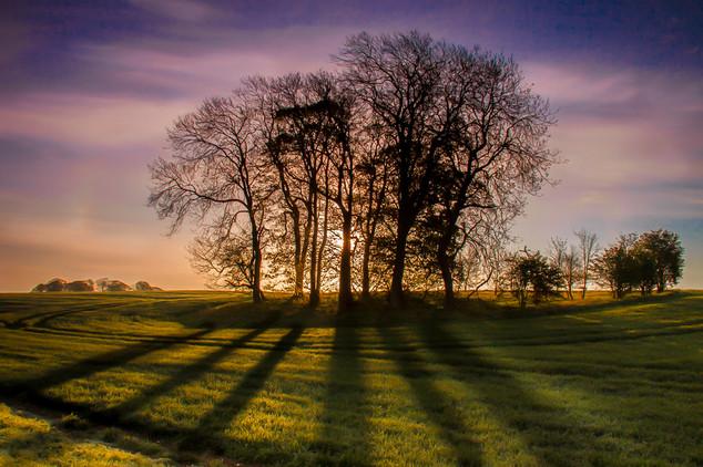 Dawn at Sledmere