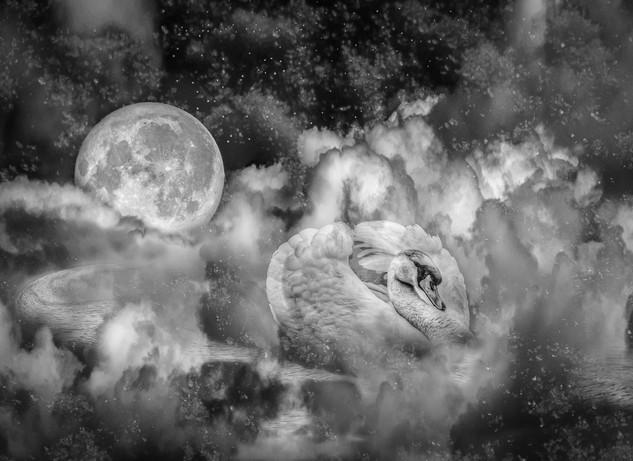 Moonswan