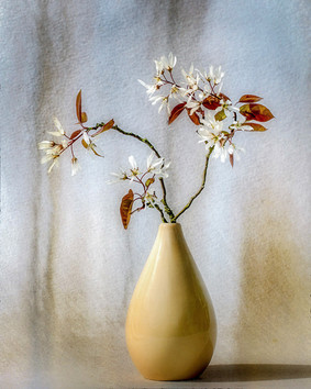 Amelanchier Sprig