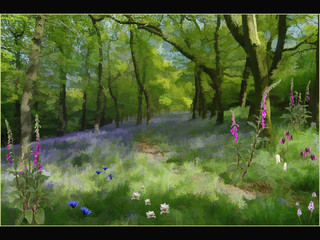Flowers of the Woodland