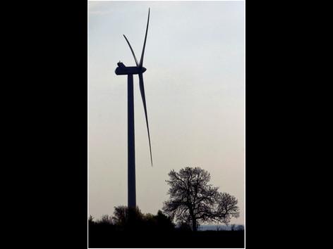 The Tree and the Turbine