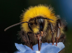 Early Bumblebee 6pts