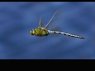 Green Dragonfly