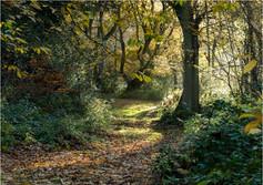 An Inviting Path