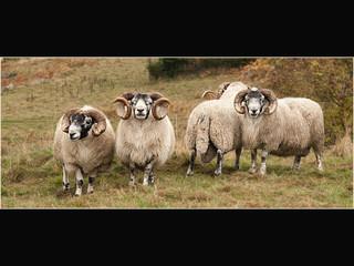 The Ram Quartet