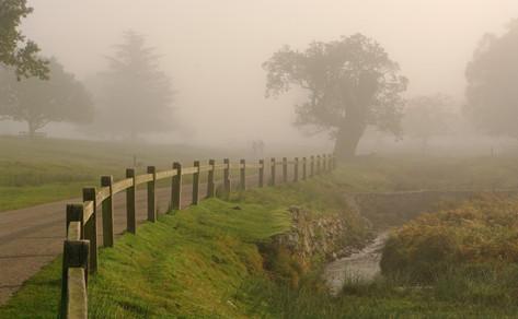 Bradgate in the Mist