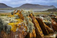 Lichen View