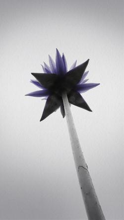 Purple Lotus_motion