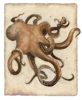 Brown Octopus.jpg
