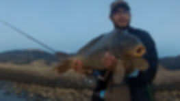 Carp caught fly fishing in Eagle Nest Lake, Eagle Nest, NM by Professional Fly Fishing Guide Timothy R. Urtiaga This is just a take of what fishing and fly fishing on this lake can produce. Fly Fishing Eagle Nest Lake produces trout, pike, carp, & salmon