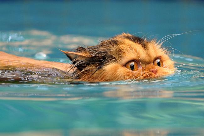 swim party.jpg