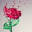 A Rose is a Rose is a Rose... Or is it?