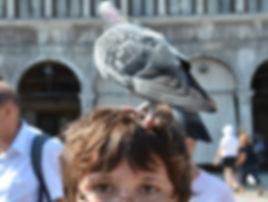 Schädlingsbekämpfung Wien