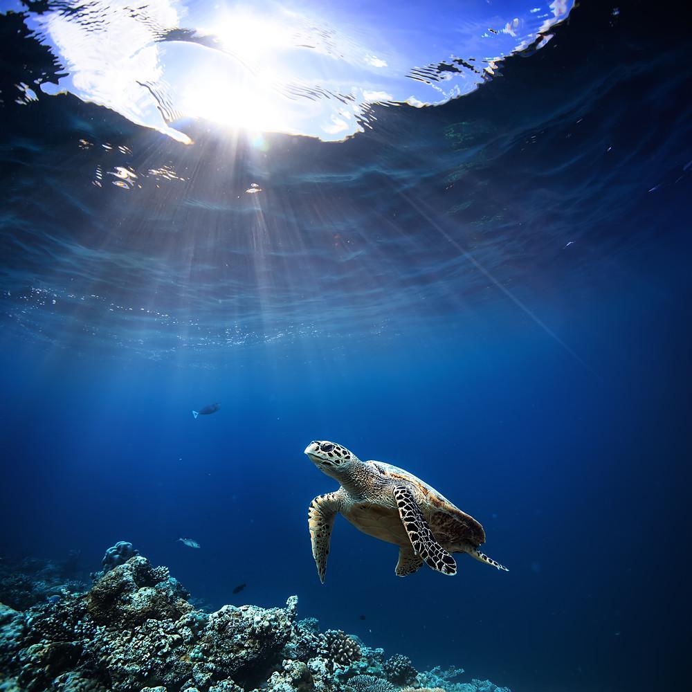 sos oceanos, ayuda oceanos, cambio climatico