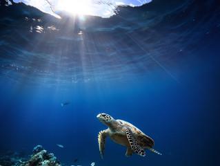 SOS OCEANOS se adhiere al  Campus de Excelencia Internacional de Medio Ambiente, Biodiversidad y Cam
