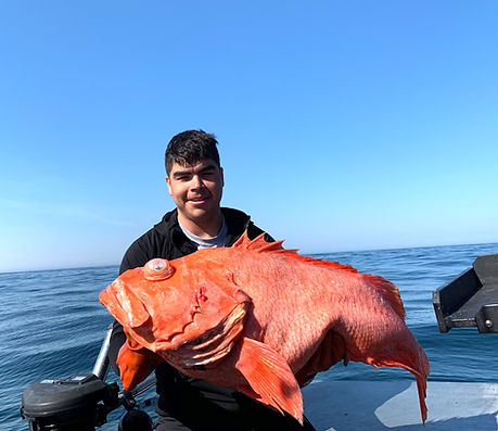 sitka rockfish