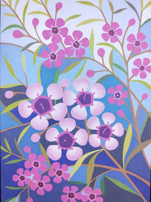 Geraldton Wax - Claire Ishino
