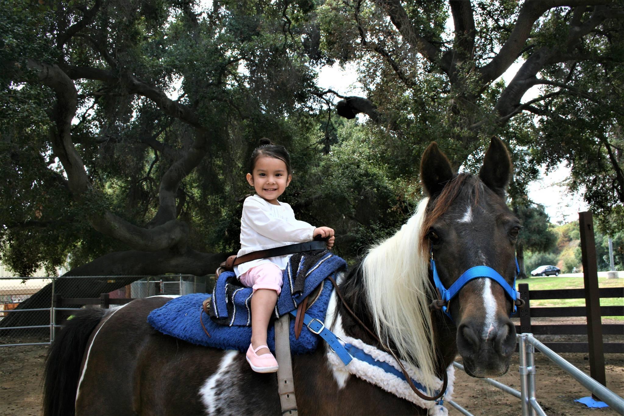 Ziggy the Pony