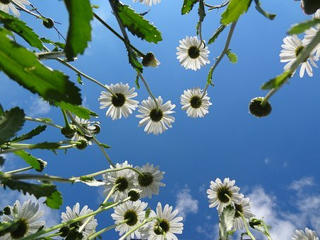 bloem hemel wit.jpg