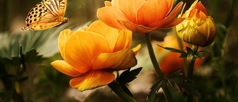vlinder bloem.jpg