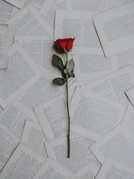 roos brieven.jpg