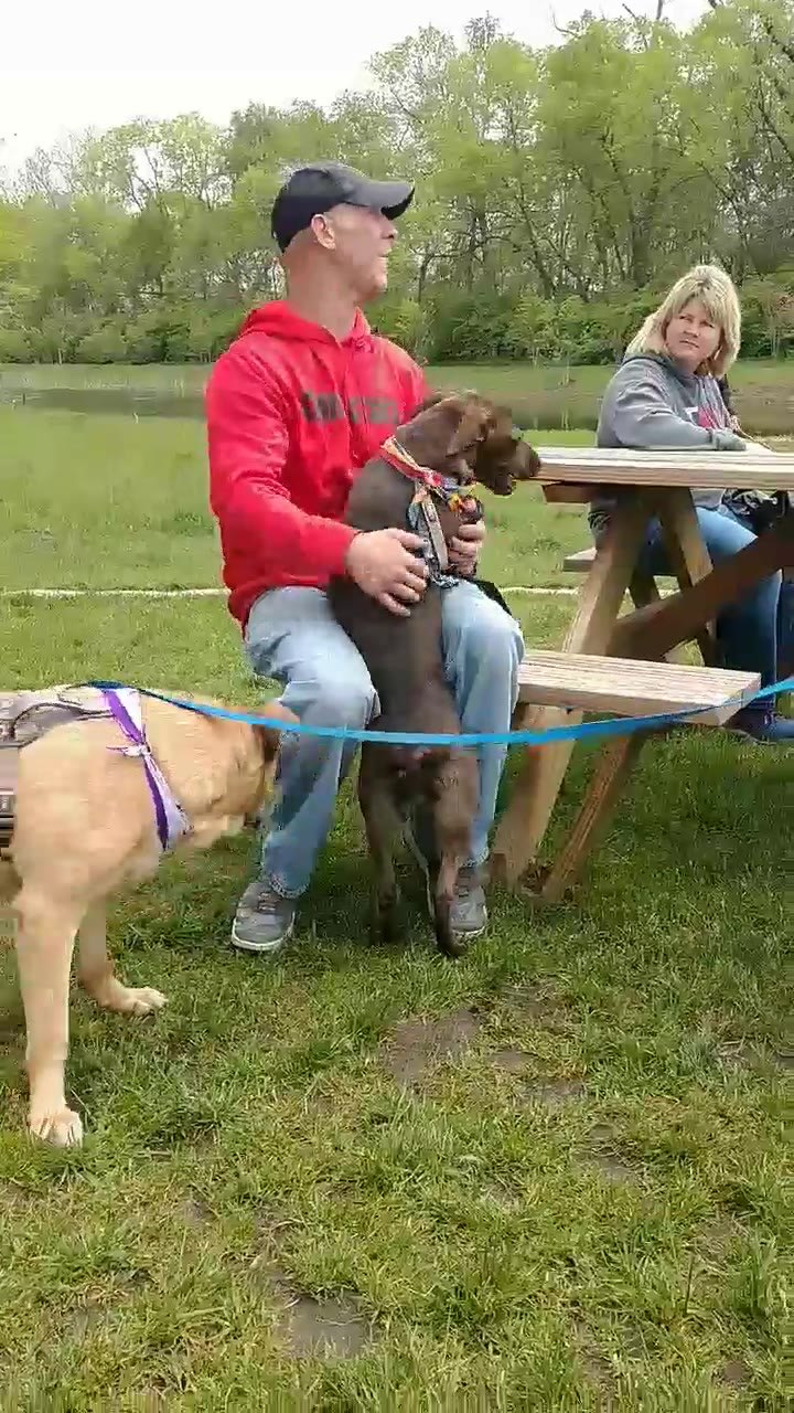 Annie: I am 6 months old and I love other dogs  Brutus: Yes, he is my foster and it shows how dog friendly I am too.  Foster: Annie is a lab mix. Is sweet and loving.   Brutus is a great dog..  Annie: Brutus maybe we'll both be adopted into forever h