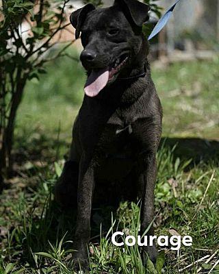 courage headshot