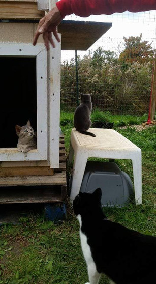 3 cats hanging out outside!
