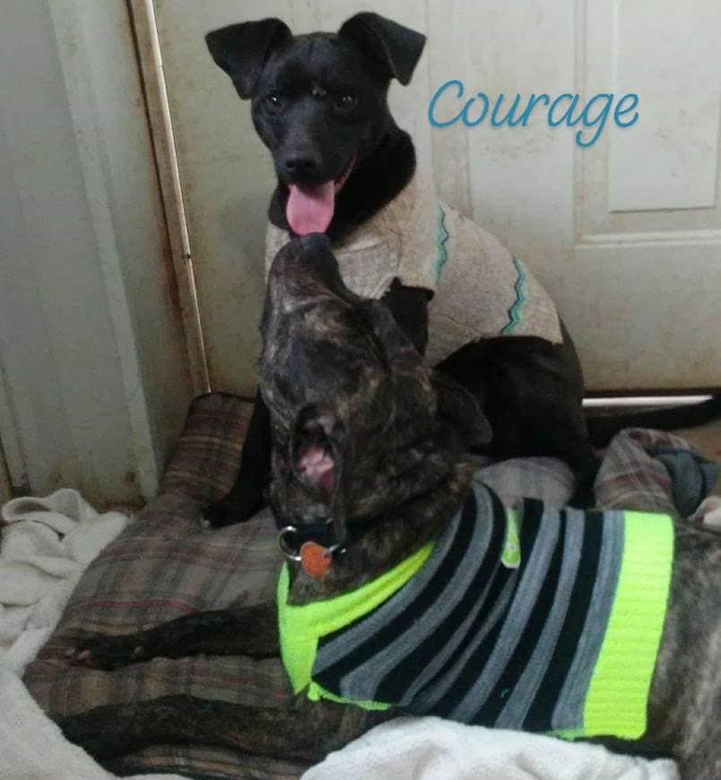 Courage and friend