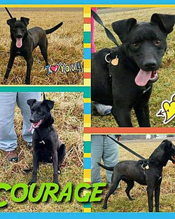 courage collage