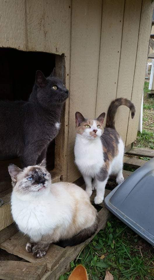 3 cats hanging outside cont.