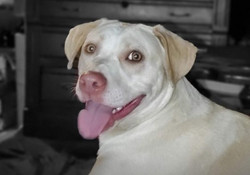 Braxton -- face