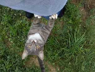 Grey Cat Outdoors