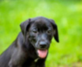 Puppy Hope