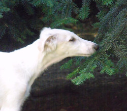 Quinn likes the smell of pine trees