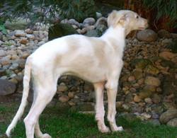 Quinn puppy free stack