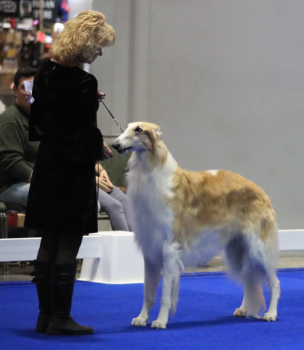 Thor with Randy Glenn at the Eukanuba National Dog show in Florida