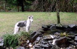Alek by the pond