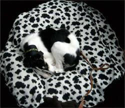 Leeza's new animal print bed