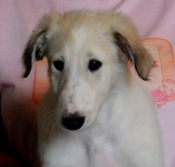 Aspen's sweet puppy face