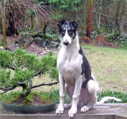 Barii as a big boy pup!