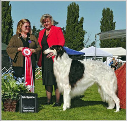 Cooper BOS at the Puget Sound Borzoi Spe