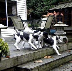 puppystairs.jpg