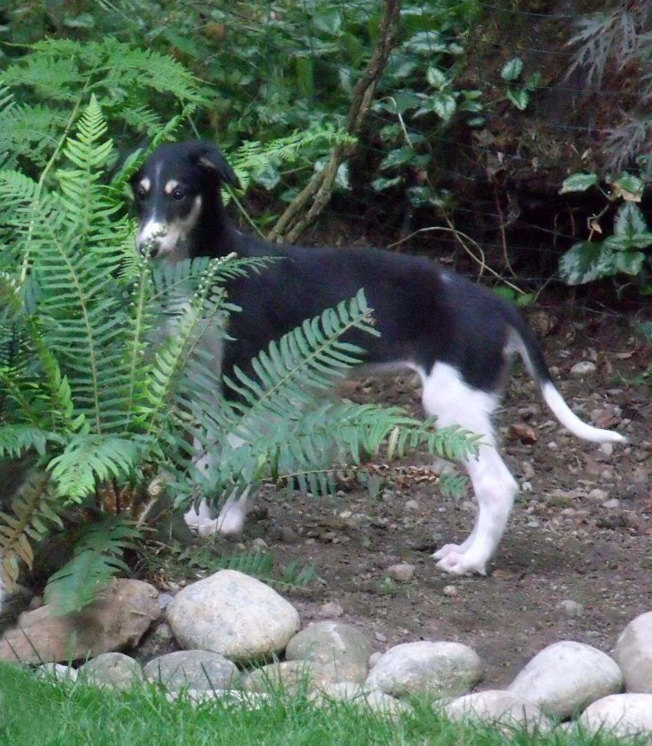 Zorica by a fern
