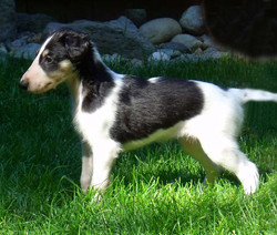 Mila puppy free stack
