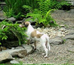 Beau exploring the pond in the morning