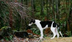 Chamise emploring the tree stump