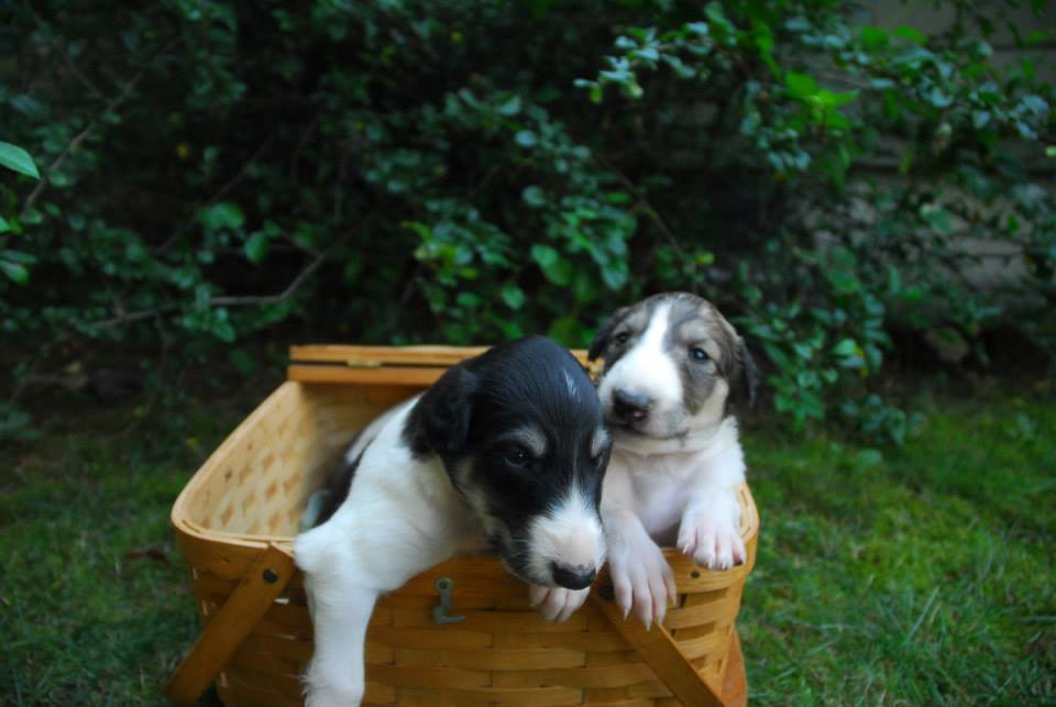Niko in a basket with his brother