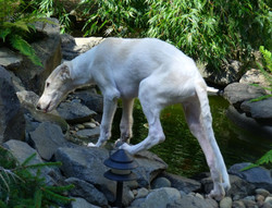 Quinn exploring the waterfall